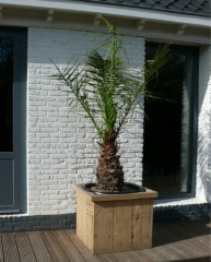 Steigerhout plantenbak